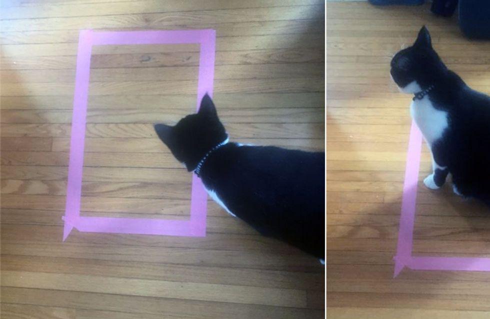 Krass! Dieses Phänomen trifft auf ALLE Katzen zu! Macht deine das auch?