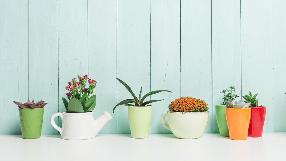 Comment entretenir ses plantes d'intérieur ?