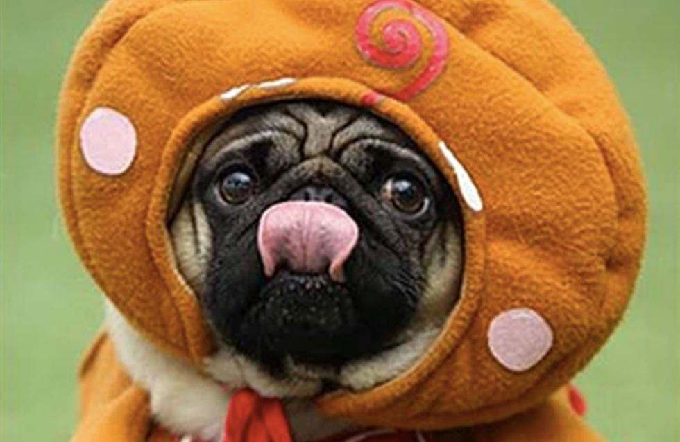 There's A Festival Dedicated To Pugs & Every Dog Lover Needs To Know About It