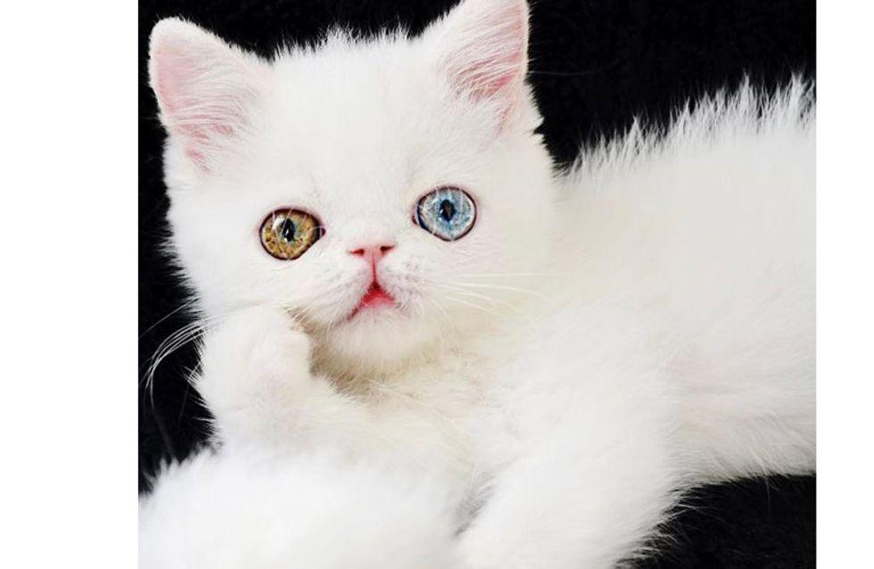 Schau mir in die Augen, Kleines! Wie eine Krankheit diese Katze zum Instagram-Star macht