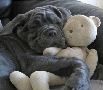 38 mascotas que duermen como bebés con su peluche favorito