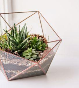 Les plantes d'intérieur faciles à entretenir qu'on veut absolument chez nous !
