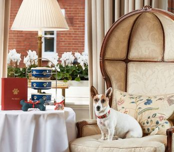 Who Needs Humans? You Can Now Have Afternoon Tea With Your Pooch