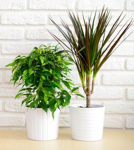 Pour respirer un air plus sain chez soi, rien de mieux que les plantes dépolluan