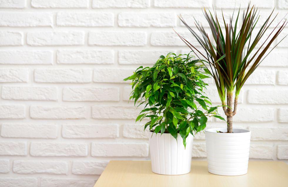Pour respirer un air plus sain chez soi, rien de mieux que les plantes dépolluantes !