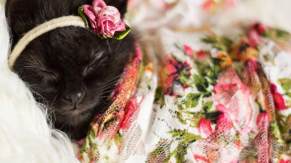 Una fotografa fa uno shooting con un nuovo nato... che è un gattino!