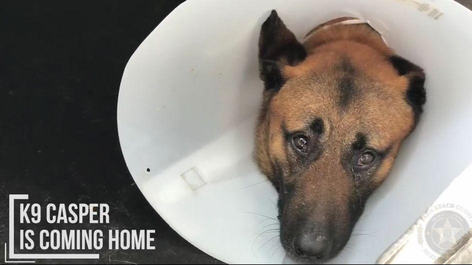 Retter auf 4 Pfoten: Polizeihund wirft sich in Kugelhagel und rettet seinen Partner