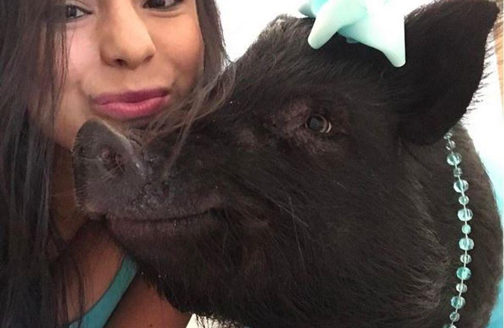 Ein Therapie-Schwein zum Verlieben: Blue will helfen und verzaubert dabei jeden