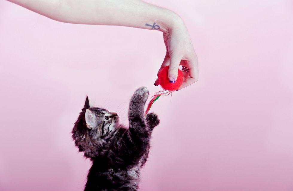 Alles für die Katz! Diese genialen Erfindungen wird nicht nur deine Katze lieben