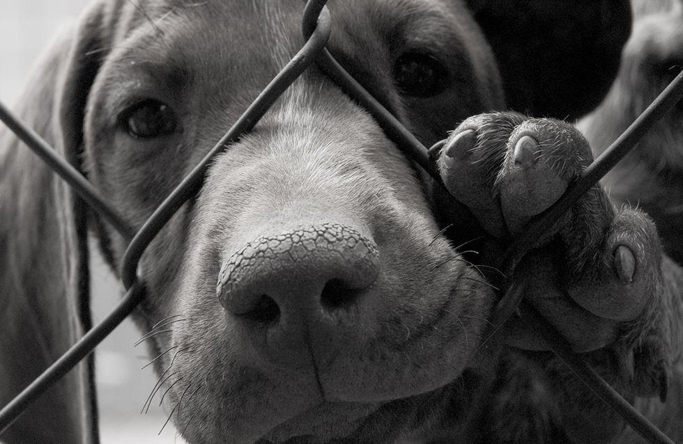 Un cane abbandonato che ha ritrovato la fiducia nell'uomo e la felicità