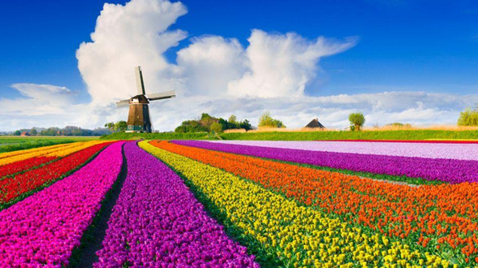 Os mais impressionantes campos floridos do mundo