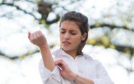 Primeros auxilios: cómo actuar ante una picadura de mosquito, abeja, medusa...