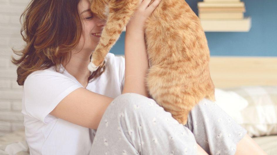 Il gatto perfetto per ogni segno zodiacale