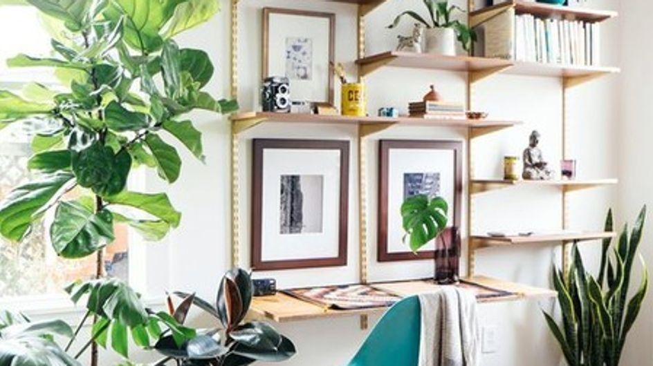Plantas em ambientes internos: use sem moderação