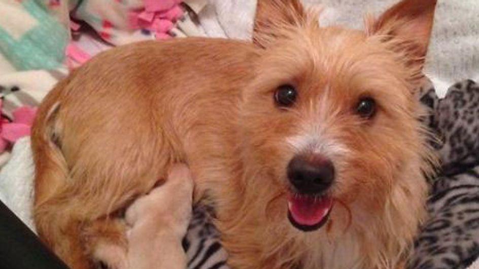 Esta cachorrinha adotou filhotes abandonados após perder os seus