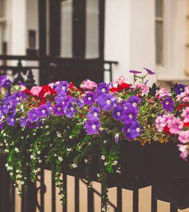 Las 8 plantas que necesitas para presumir de balcón este verano