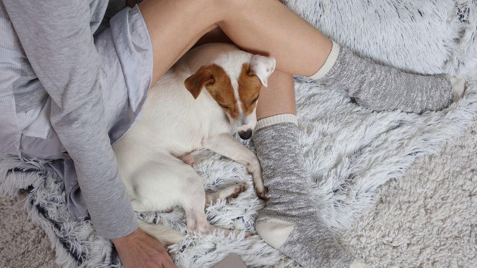 Für Hundefans: 10 Geschenkideen für deinen besten Freund