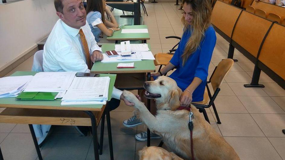 Pet therapy: la soluzione contro l'ansia da esame