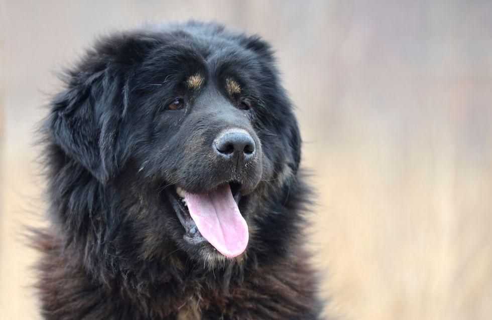 Seelenloses Urteil: Hund bellt zu laut - jetzt sollen seine Stimmbänder entfernt werden