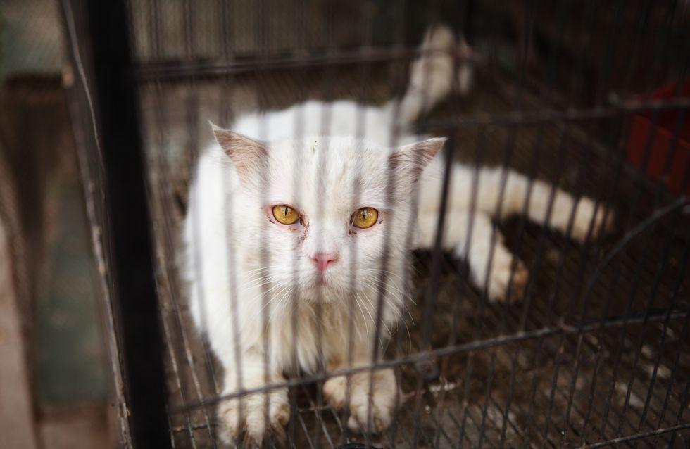 A Paris, une femme retenait 130 chats dans un appartement de 25m²