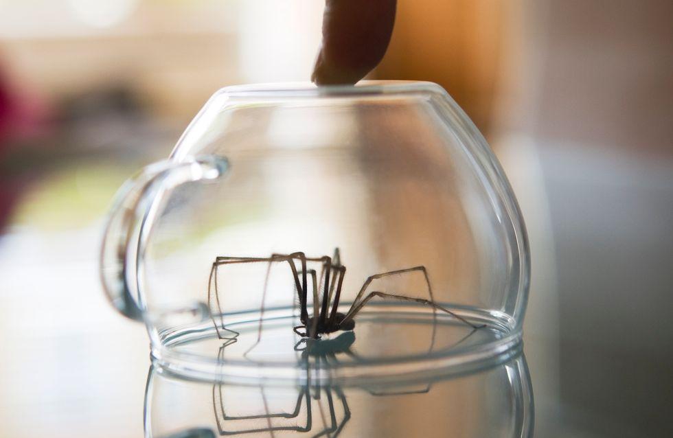 Vor DIESER giftigen Spinnenart warnen nun Experten in Deutschland!