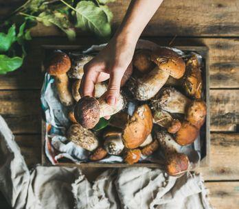 Voglia di funghi? Ecco 11 proprietà e benefici che te ne faranno venire ancora d
