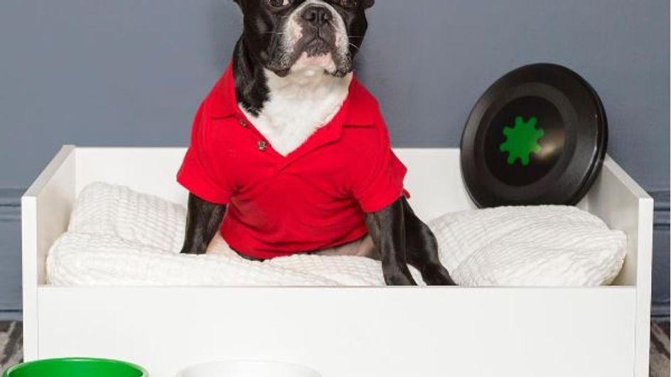 Alles für den Hund: IKEA macht jetzt Möbel für Haustiere