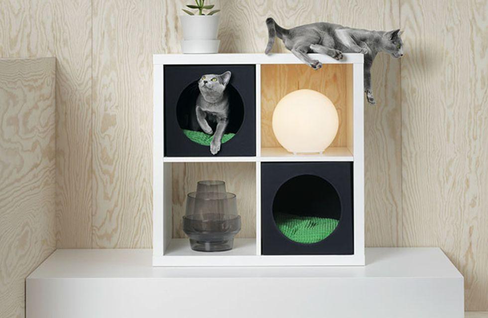 La domenica tutti all'Ikea, è in arrivo la linea per cani e gatti!