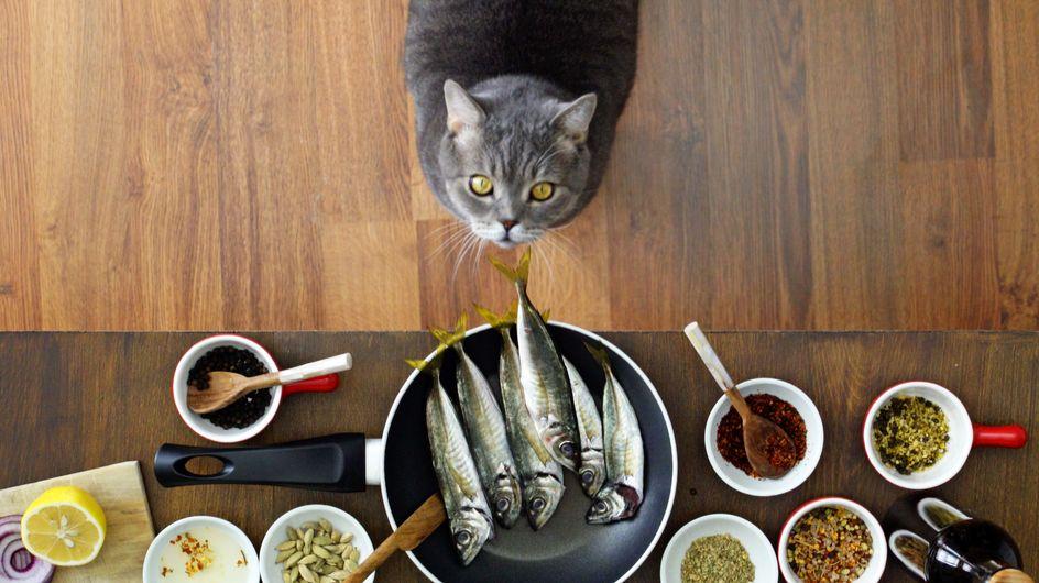 Un livre de recettes pour vous... Et pour votre chat !