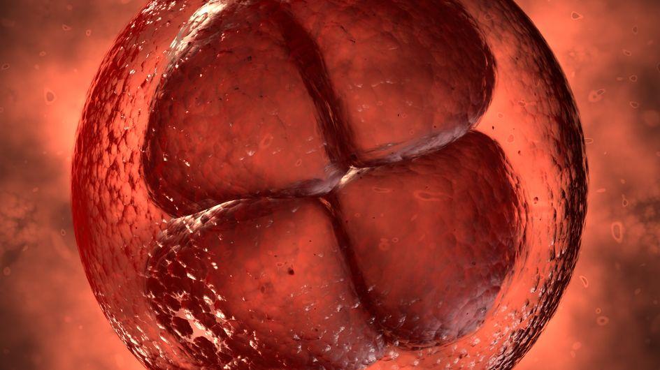 1a settimana di gravidanza per la mamma e il bambino - 1° mese di gravidanza