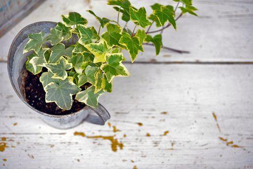 Pflanzen fürs Schlafzimmer: Die fördern einen gesunden Schlaf