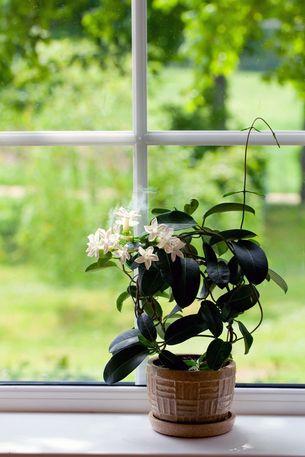 Pflanzen Furs Schlafzimmer Die Fordern Gesunden Schlaf
