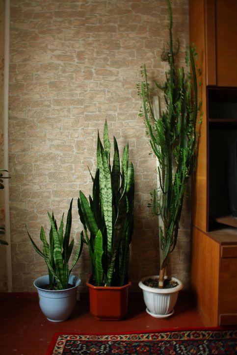 Pflanzen Im Schlafzimmer Die 7 Besten Exemplare Zum Durchschlafen