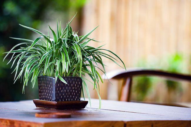 Pflanzen im Schlafzimmer: Die 7 besten Exemplare zum Durchschlafen