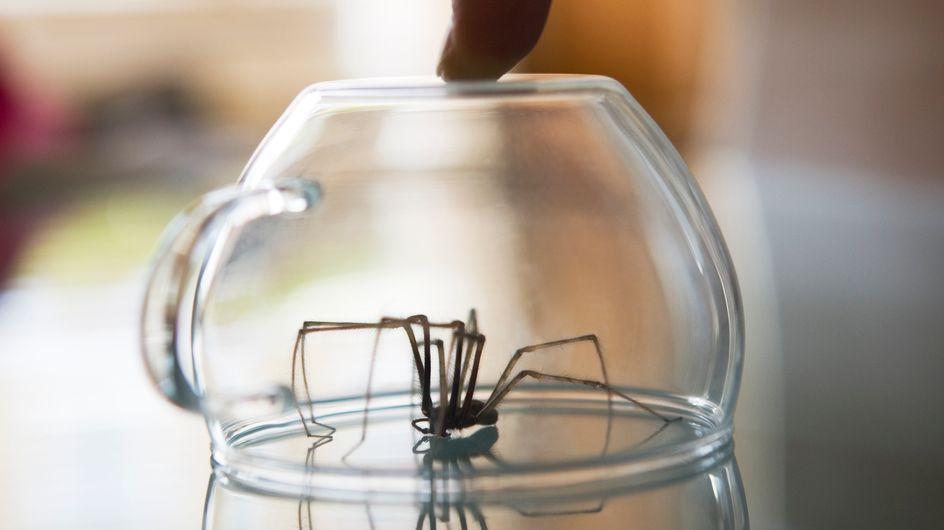In DIESEM Raum deiner Wohnung leben die meisten Spinnen und Insekten