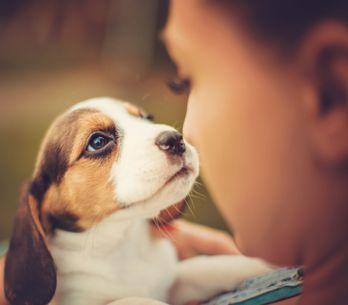 Test : quel animal de compagnie choisir pour mon enfant ?