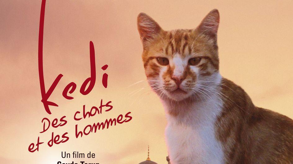 Kedi des chats et des hommes, une ôde cinématographique aux félins d'Istanbul !