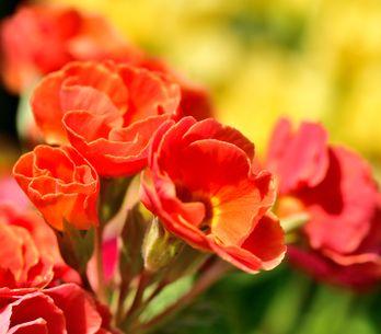 Sboccia la primavera: fiori e piante per il balcone e il giardino!