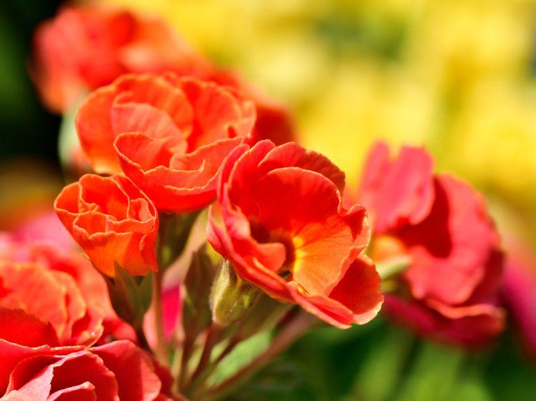 1bc6fd7588 Classici o originali: i più bei fiori da piantare in primavera