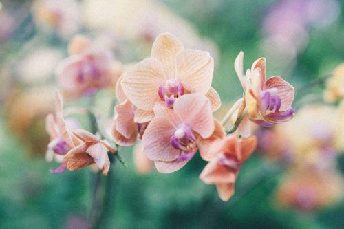 Pflanzen fürs Bad: Diese 7 Gewächse eignen sich perfekt!