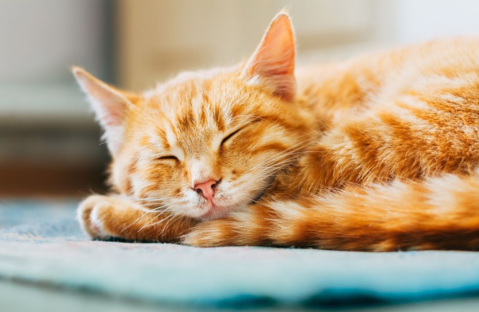 Snoozen bis der Arzt kommt: 10 Dinge, die jeder Morgenmuffel GARANTIERT kennt