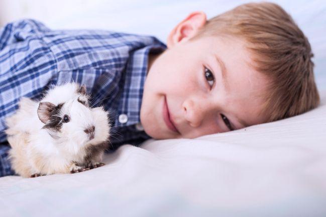 Von Hund Bis Vogel Welche Haustiere Sind Fur Kinder Geeignet