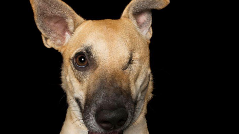 Perfectamente imperfectos: estos perros te robarán el corazón