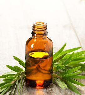 ¿Para que sirve el aceite del árbol del te? 20 usos sorprendentes