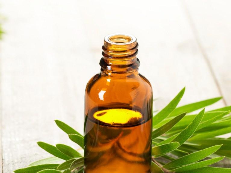Para que sirve el aceite del árbol del te? 20 usos sorprendentes