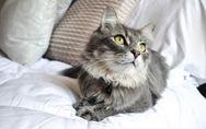 Der Schmusetiger-Test: Welche Katze passt zu mir?
