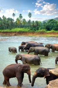 Partir pour le Sri Lanka plutôt qu'à Bali