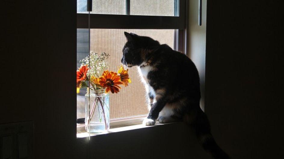 On sait ENFIN pourquoi les chats font constamment tomber nos affaires de la table