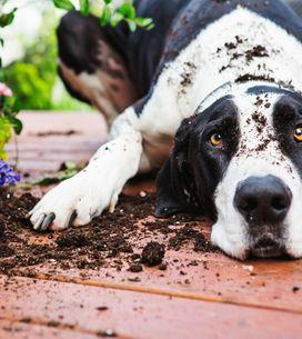 5 cose da insegnare assolutamente al tuo cane