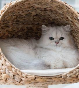 ¡No es mala fama! Las razones científicas de por qué los gatitos son antisociale
